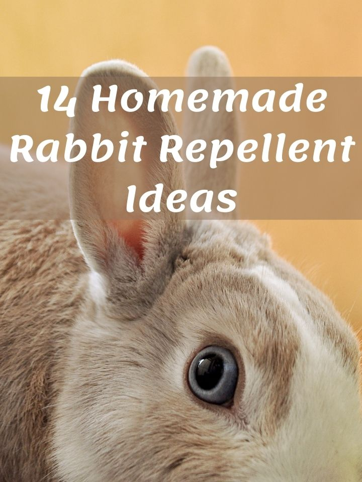 Homemade Rabbit Repellent Ideas