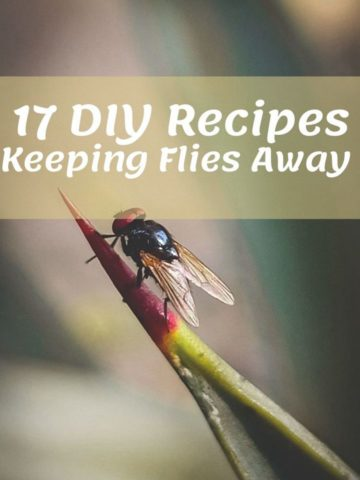 Keep Flies Away