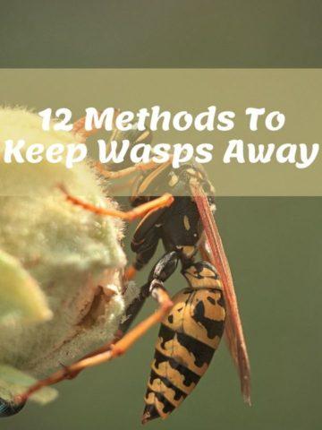 Keep Wasps Away