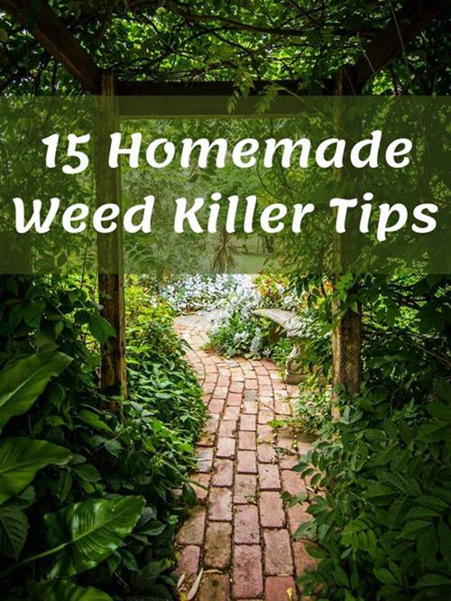 how-to-make-a-homemade-weed-killer