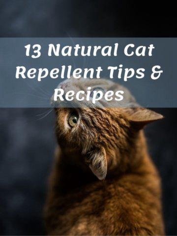13 Natural Cat Repellent Tips & Recipes