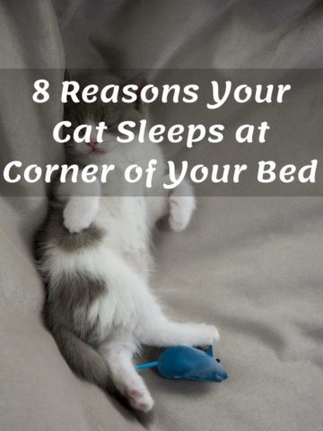 Reasons why your cat sleeps at corner of your bed