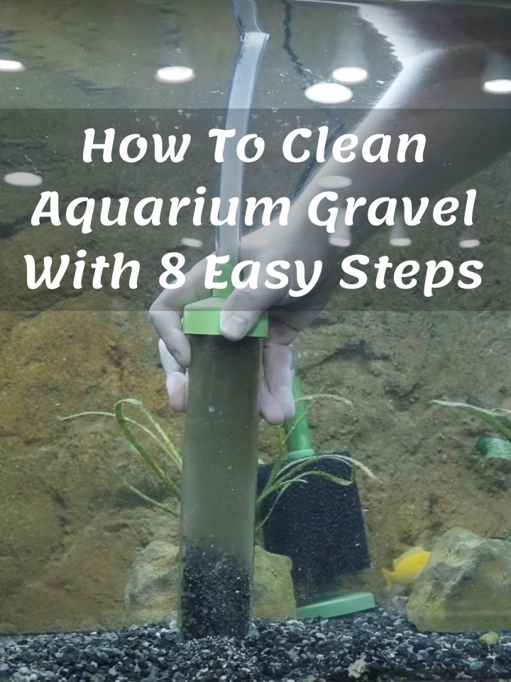 How To Clean Aquarium Gravel With 8 Easy Steps