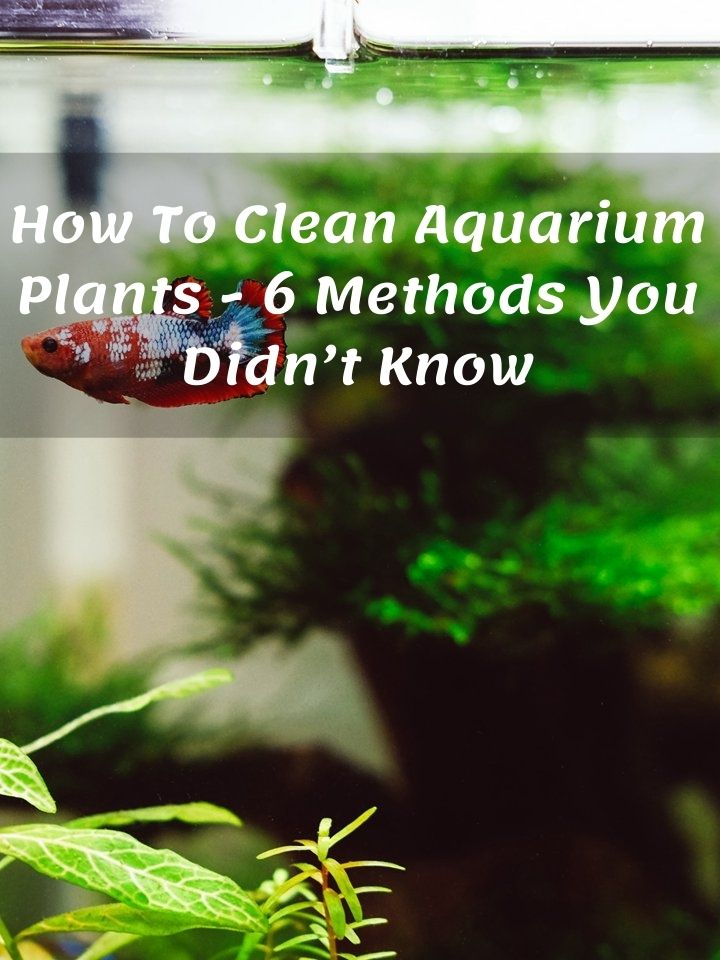 How To Clean Aquarium Plants - 6 Methods You Didn't Know