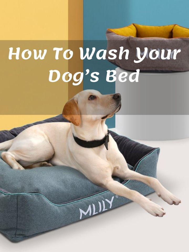 How To Wash Your Dog's Bed