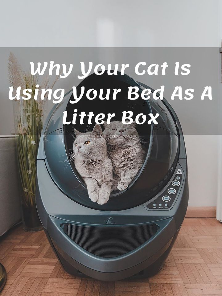 Why Your Cat Is Using Your Bed As A Litter Box