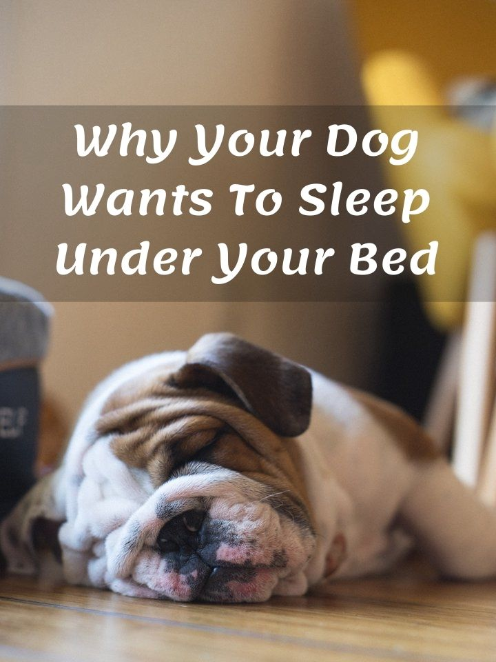 Why Your Dog Wants To Sleep Under Your Bed